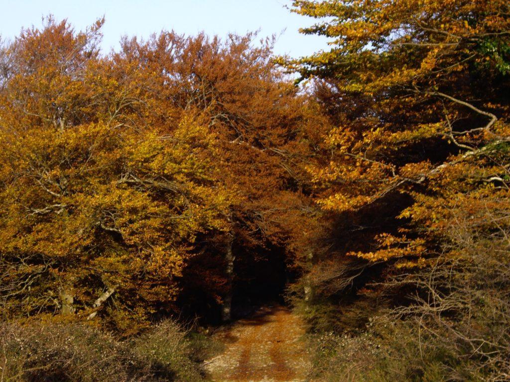 colores del bosque en otoño